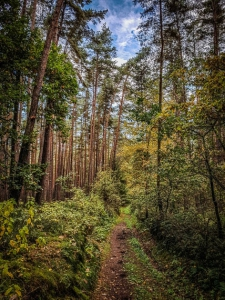 Naturbelassener mit Gras überwachsener Weg