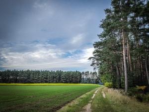 An einem Waldrand entlang