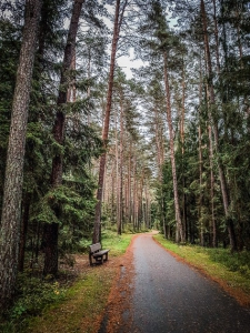 Schmaler geteerter Weg im Wald