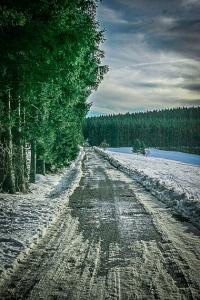 An Waldrand entlang