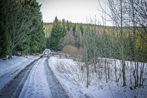 Breiter Weg am Wald mit Lichtung