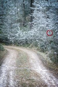Weg im Wald mit Raureif