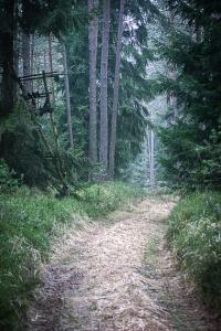 Natürlicherer Weg im Wald