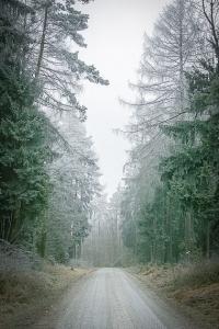 Auf breiter Forststraße im Wald