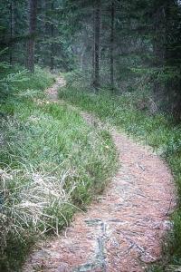 Kurviger Wanderpfad hinter der Rotmainquelle