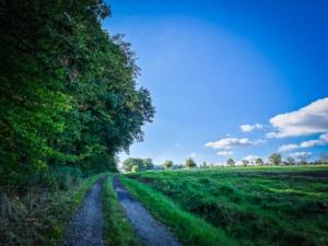 Schotterweg am Waldrand entlang