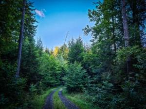 Weiter unten auf dem Waldweg entlang