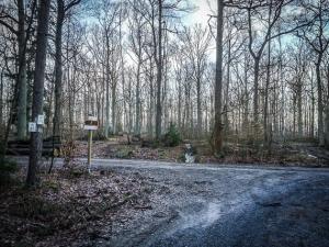 Dreiecks-Kreuzung im Wald