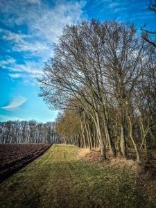 Wandern am Waldrand entlang