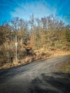 Dem breiten Forstweg folgen