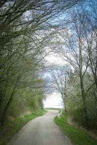 Weg durch Hecken