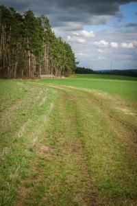 Weg Waldrand