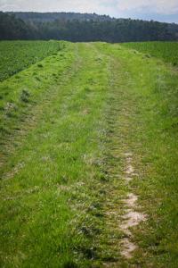 Wiesenweg zum Dreifranken-Stein