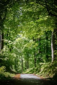 Weg in den Laubwald