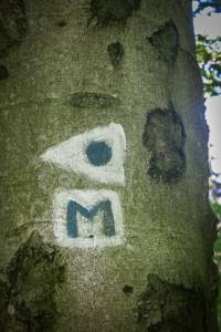 Mainwanderweg und anderer Wegweiser an Baum