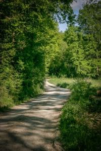 Schotterweg am Waldrand