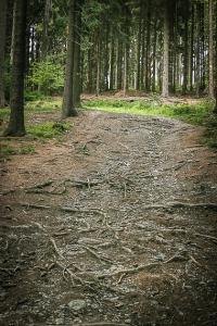 Steiniger Weg bergauf