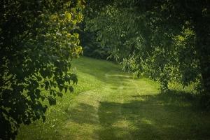 Rundum grüner Weg
