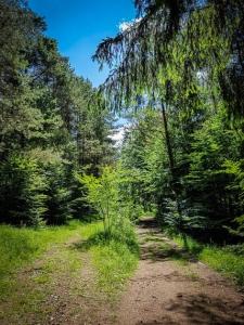 Weg teilt sich im Wald