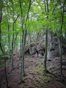 Weiter hoch zu den Felsen
