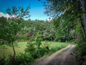 Große Linkskurve am Waldrand
