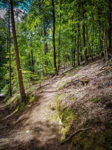 Wanderpfad auf den Hirtenberg-Rundweg