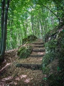 Waldtreppe weiter hinauf