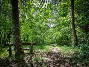 Sitzbank im Wald