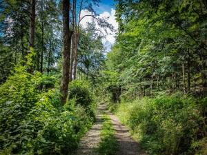 Gerader Weg in den Wald