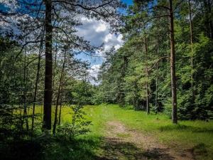 Wieder auf großer Kreuzung am Waldrand