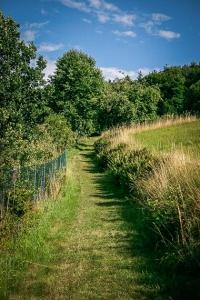 Weg aus dem Ort an Hecken entlang