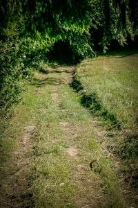 An größerer Hecke entlang zum Waldrand