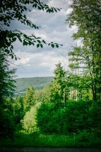 Wandern im teils lichten Wald
