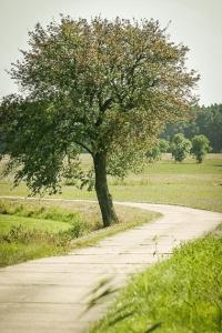 Einzelner Baum am Weg