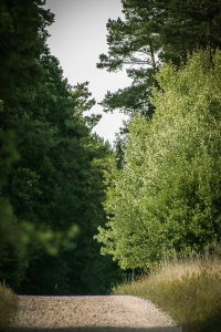 Breiter Schotterweg im Wald