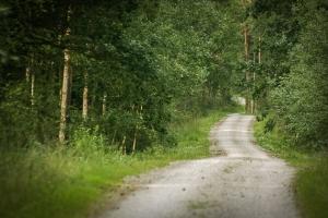 Weg geradeaus im Wald