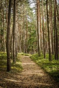 Schluss-Etappe durch den Wald