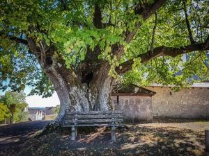 Riesiger alter Baum vor Hohenpölz