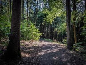 Kurze Etappe im Wald