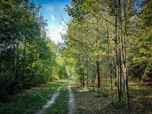 Weg durch junge Baumbestände