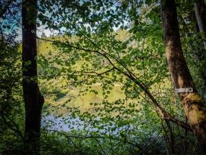 Blick durch die Blätter