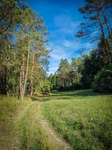 Weg aus dem Tal hinaus