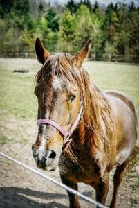 Pferd am Wegrand