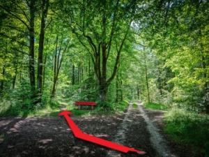Rote Bank am Waldrand