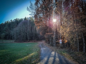 Weg am Waldrand außerhalb von Burgstall