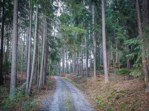 Weg-Anstieg in den Wald