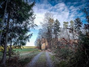 In Richtung Waldrand