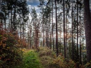 Wald unterhalb der Heunischenburg