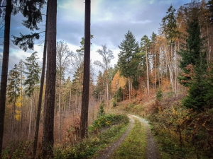 Rückweg im Wald