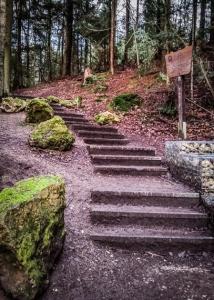 Weitere Waldtreppe